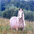 Horse at Dougary in Cavan