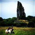 Horses, castle, Clare