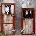 Horses Heads, Sligo
