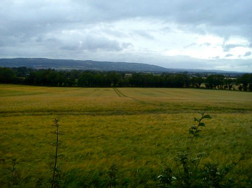 Carlow fields