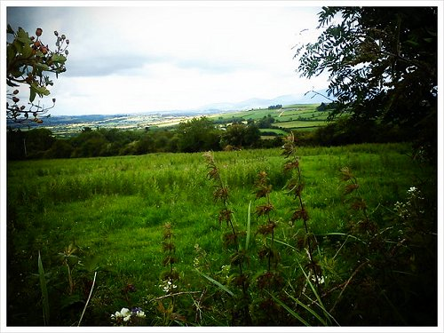 Kilkenny View